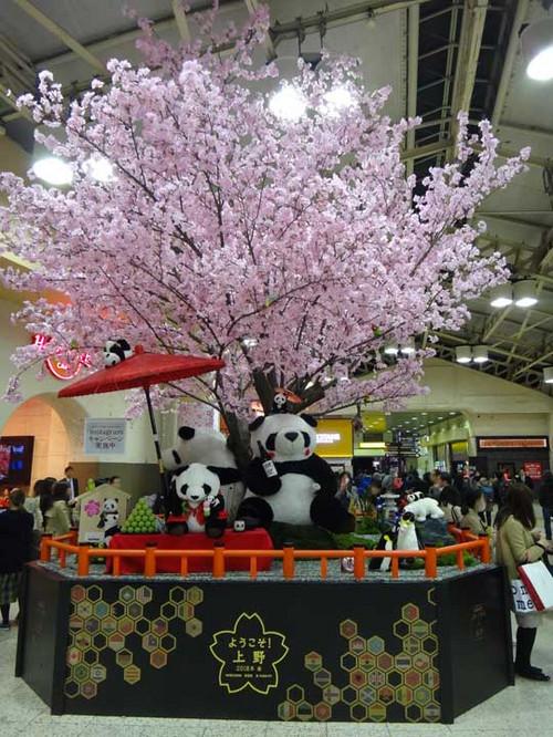 Sakura_01